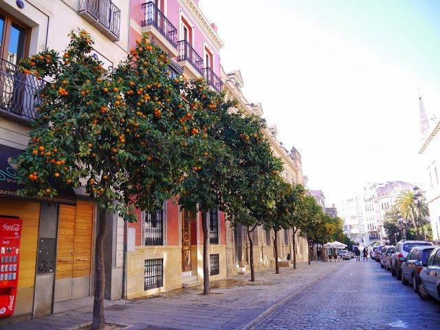 seville spain orange trees