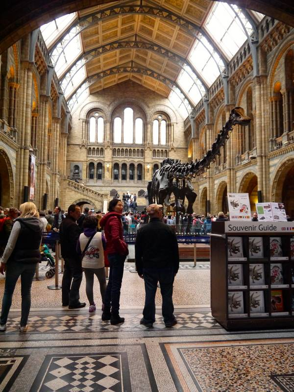 Natural history museum london dinosaurs