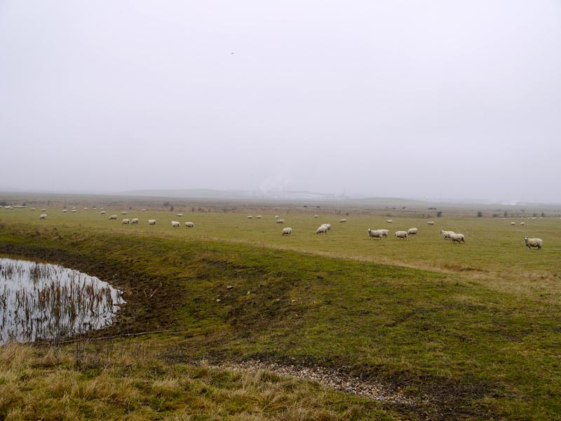Elmley Nature Reserve & Whitstable