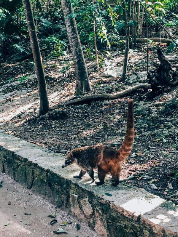 Mayan Ruins Wildlife